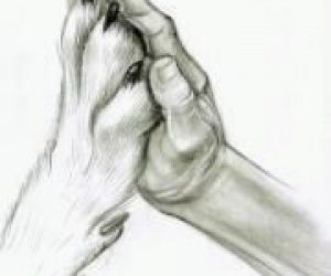 Hånd og pote